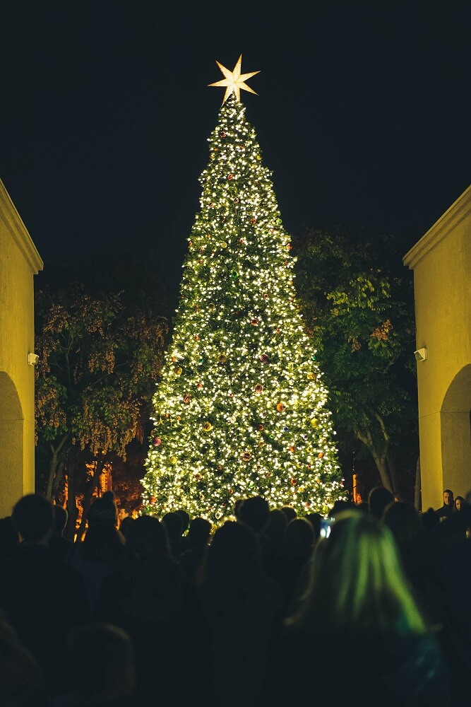 people look up at christmas tree lit up at night
