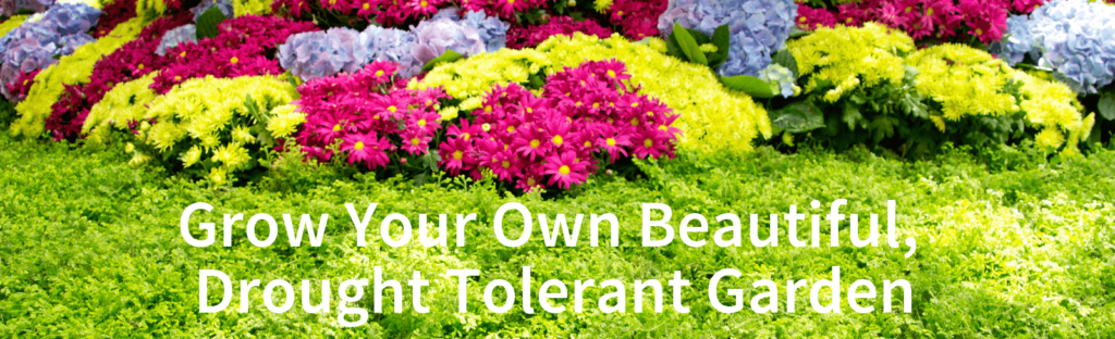Drought Tolerant plants southern california