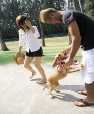 Dog playing with a mid adult man and a young woman in a park