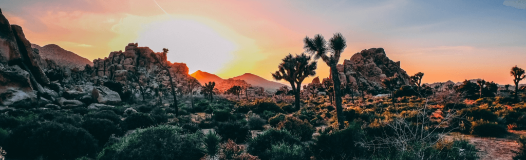 sunset in joshua tree national park california